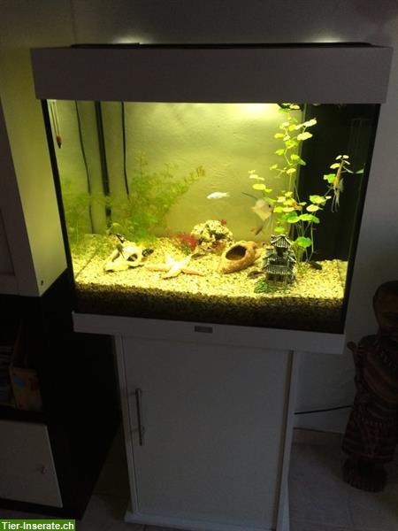 komplettes juwel aquarium 120 liter mit m bel fischen. Black Bedroom Furniture Sets. Home Design Ideas