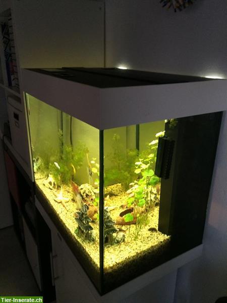 komplettes juwel aquarium 120 liter mit m bel fischen deko tierinserat 304674. Black Bedroom Furniture Sets. Home Design Ideas
