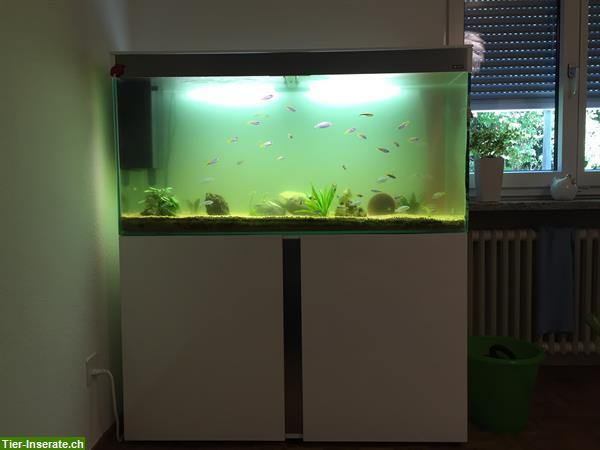 200 liter aquarium inkl aquariumm bel fische zu. Black Bedroom Furniture Sets. Home Design Ideas