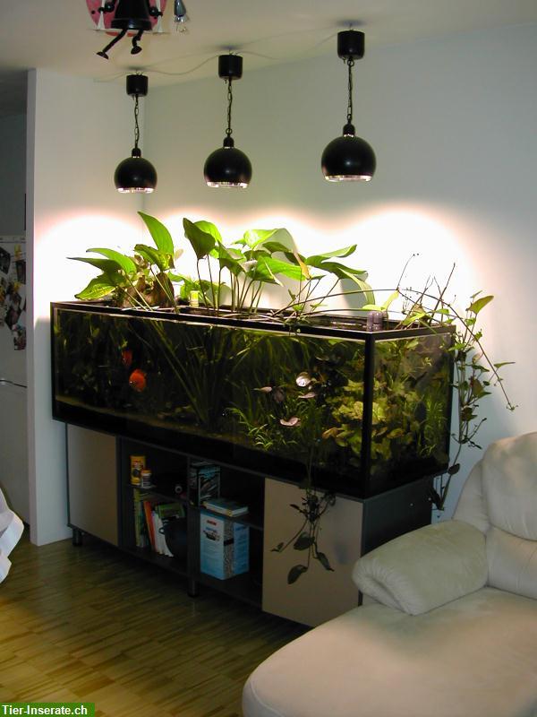 720 liter aquarium mit unterschrank aqua stabil mit for Aquarium mit unterschrank