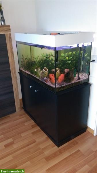 verkaufe aquarium mit fischen und viel zubeh r tierinserat 285485. Black Bedroom Furniture Sets. Home Design Ideas
