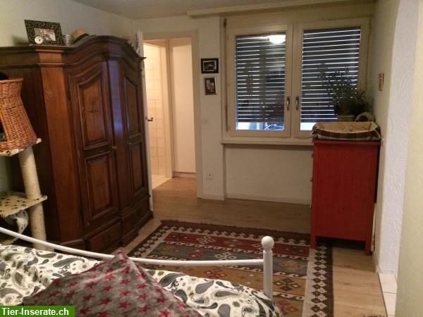 vermieten 2 zimmer wohnung haustiere willkommen merenschwand ag tierinserat 315279. Black Bedroom Furniture Sets. Home Design Ideas