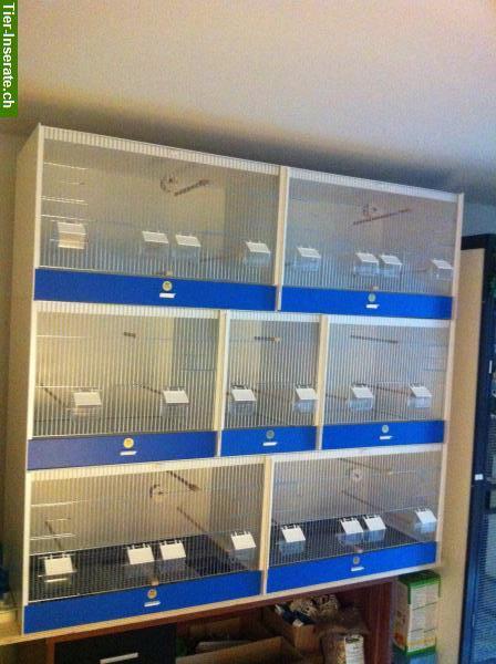 zuchtboxen doppelboxen von der firma graf zu verkaufen. Black Bedroom Furniture Sets. Home Design Ideas