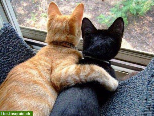 betreust du meine katze
