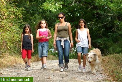 toscana familienferien mit hund in der natur in italien. Black Bedroom Furniture Sets. Home Design Ideas