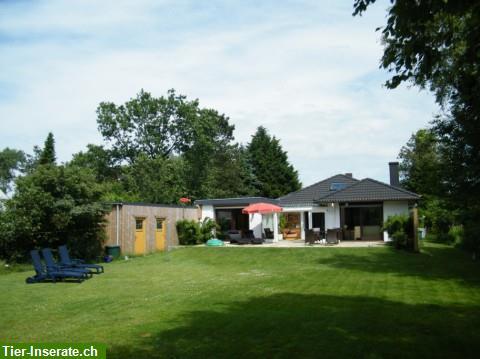 ferienhaus blinkfuer 104 im nordseebad in st peter ording tierinserat 148864. Black Bedroom Furniture Sets. Home Design Ideas