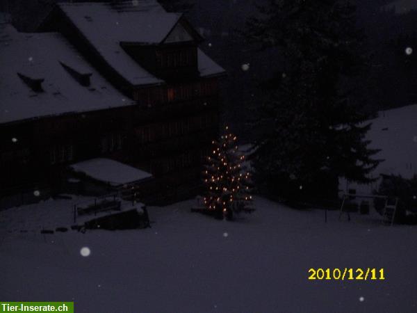 Grosse Ferienwohnung Bis 8 Personen Im Appenzellerland